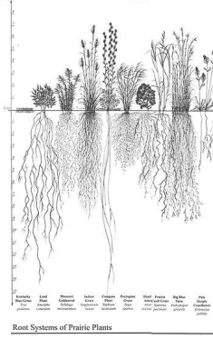 Plant Root Systems_